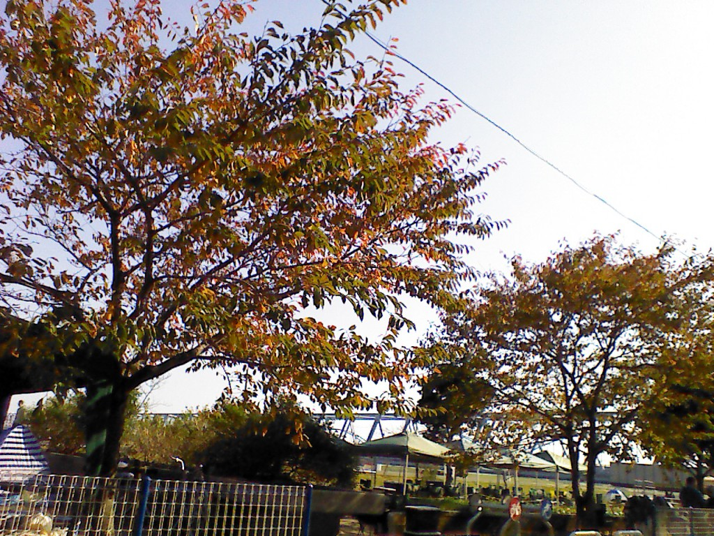 秋の市川市妙典BBQ広場