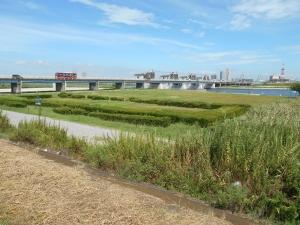 江戸川河川敷緑地でバーベキュー|行徳橋河川敷BBQエリア1